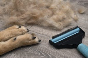 Best Brush for German Shepherd