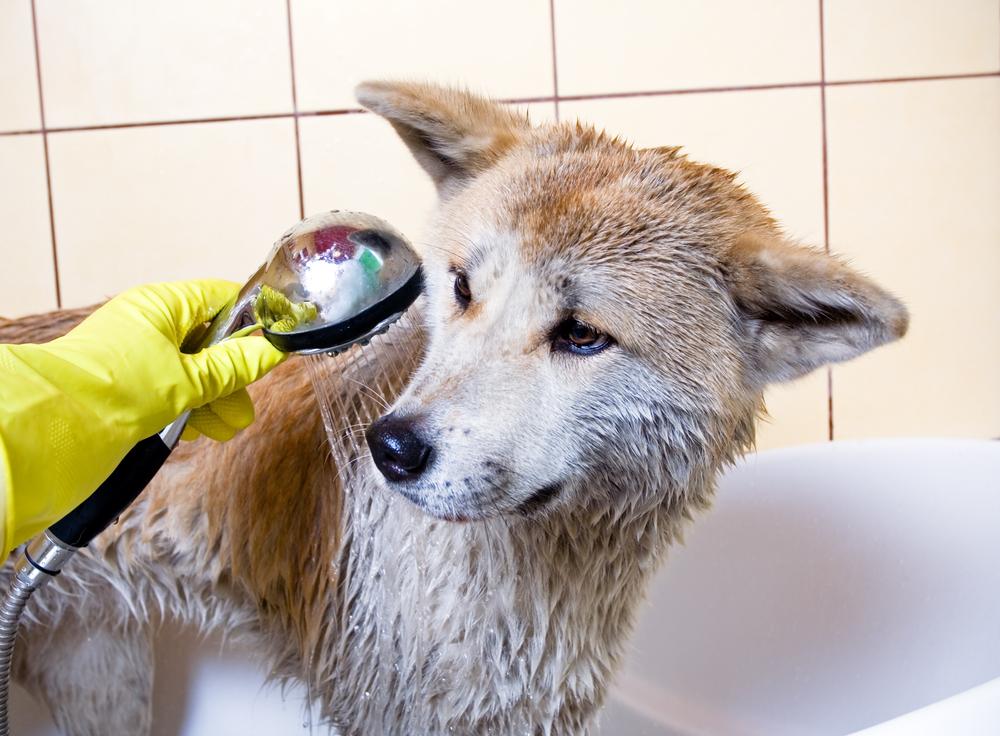 shampoo for shedding
