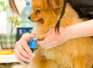Best nail clippers for small dogs