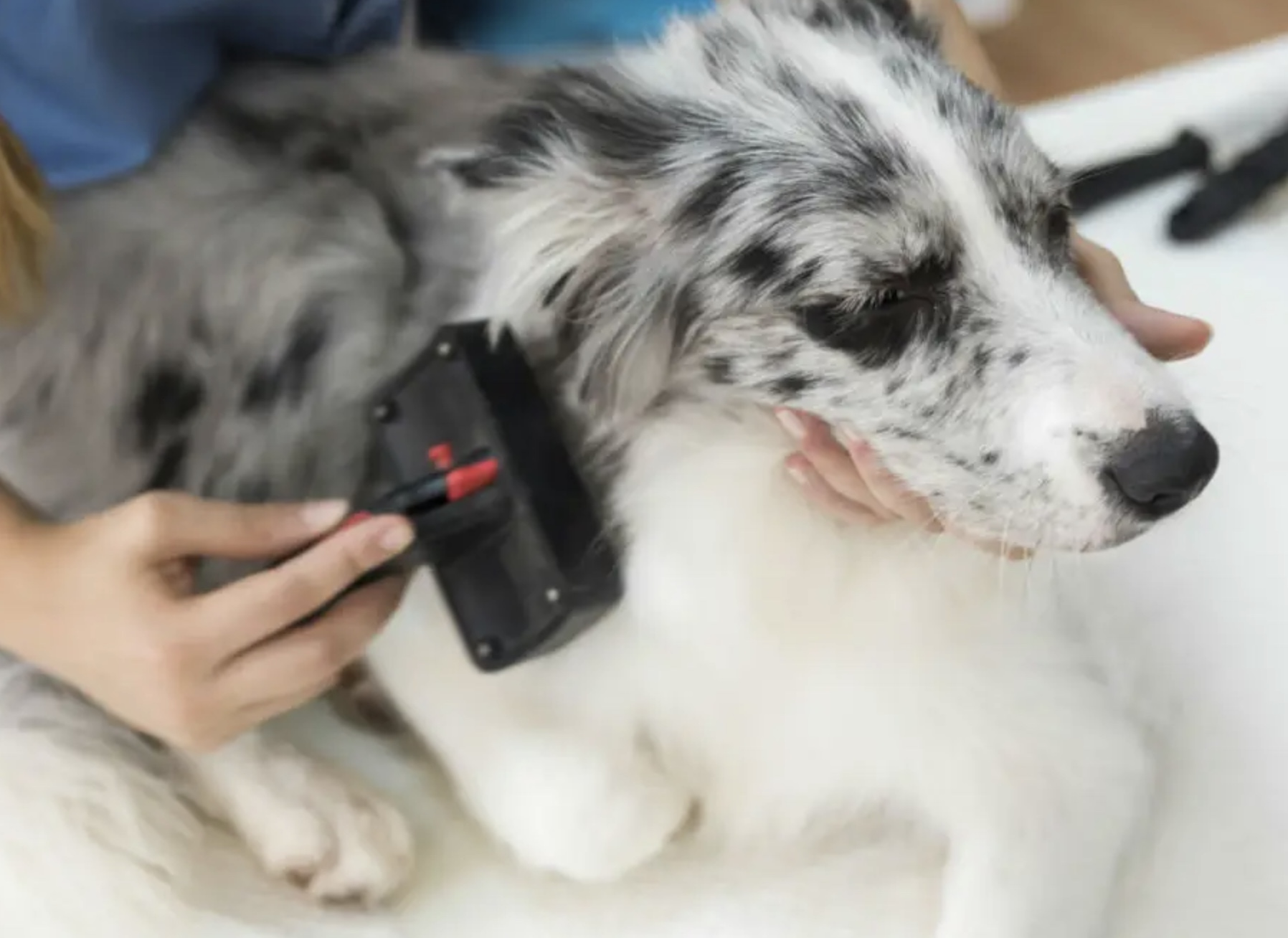 How to Improve Your Dog's Skin – Natural Remedies for Healthy Coat