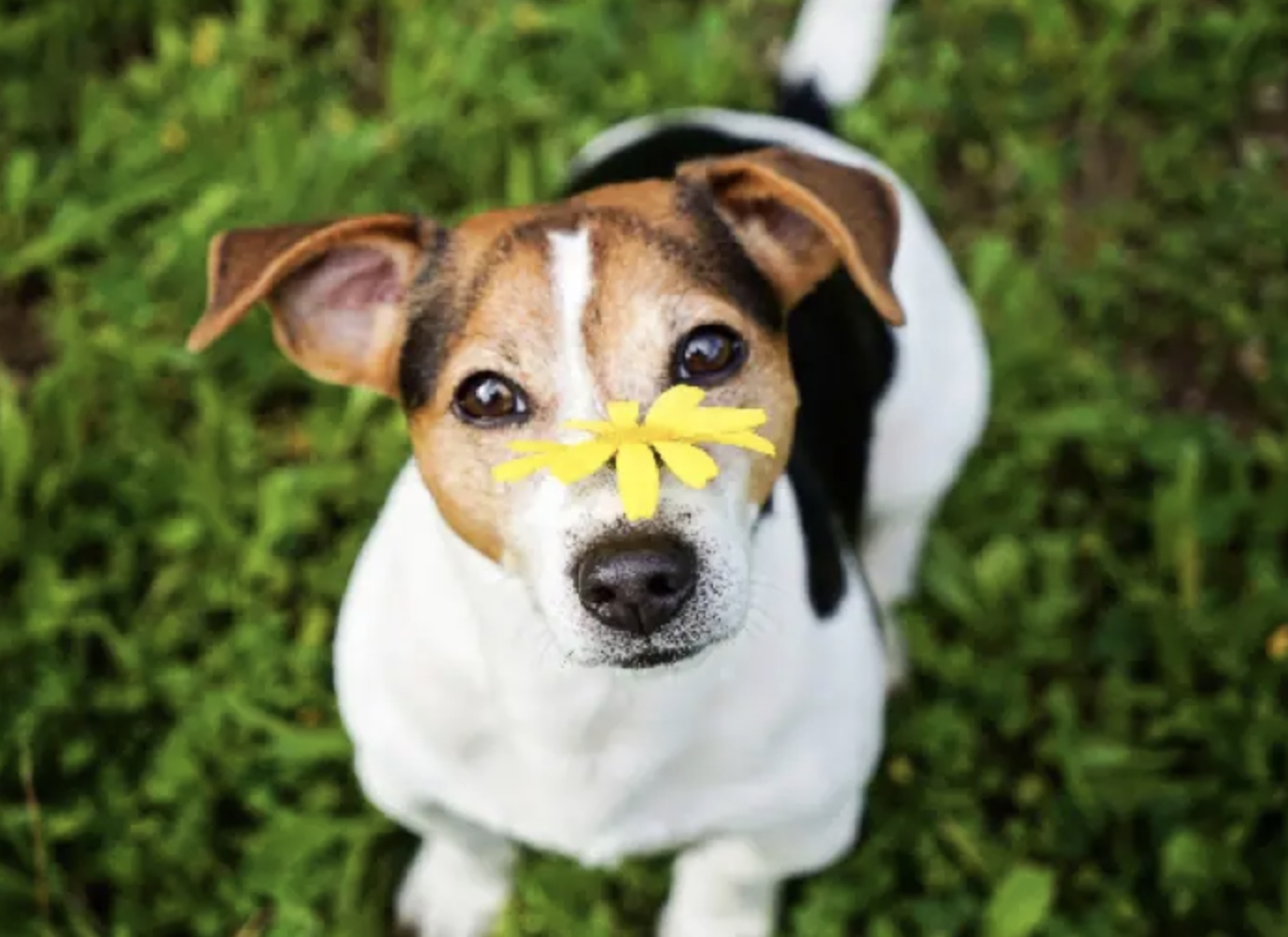 How to Make Your Dog Smell Good – Grooming Tricks and Tips