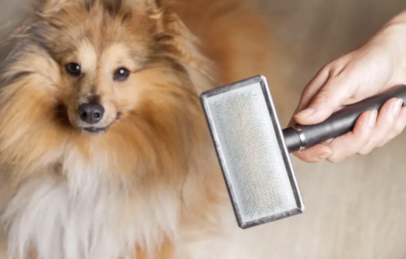 How To Stop Dog Shedding – Expert Tips To Reduce Shedding